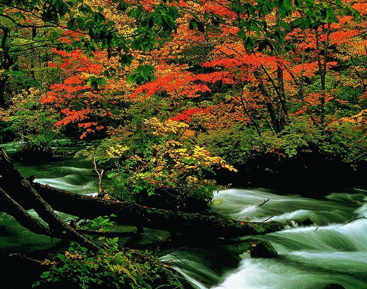 【2020年版】華麗に色づく青森県の紅葉スポット9選