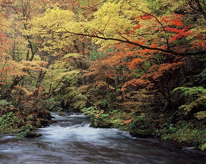 渓流美を引き立てる色鮮やかな紅葉を堪能