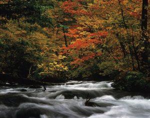 奥入瀬(おいらせ)渓流