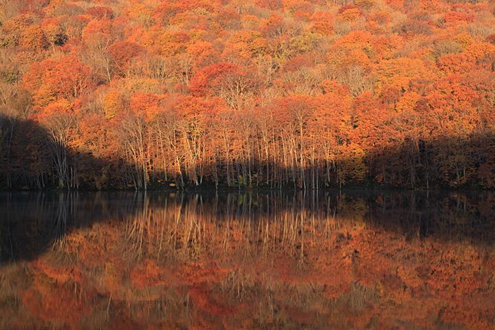 朝焼けで真っ赤に染まる紅葉に感動