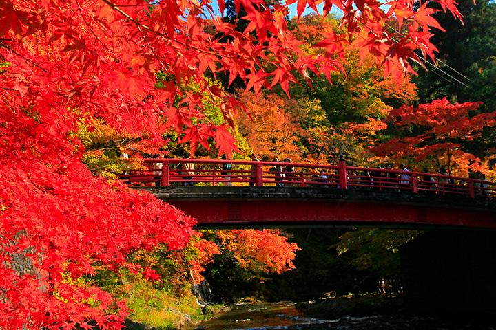 真っ赤な紅葉と赤い橋の競演は息をのむ美しさ