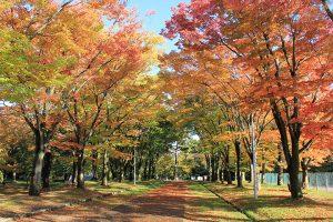 弘前公園(弘前城)