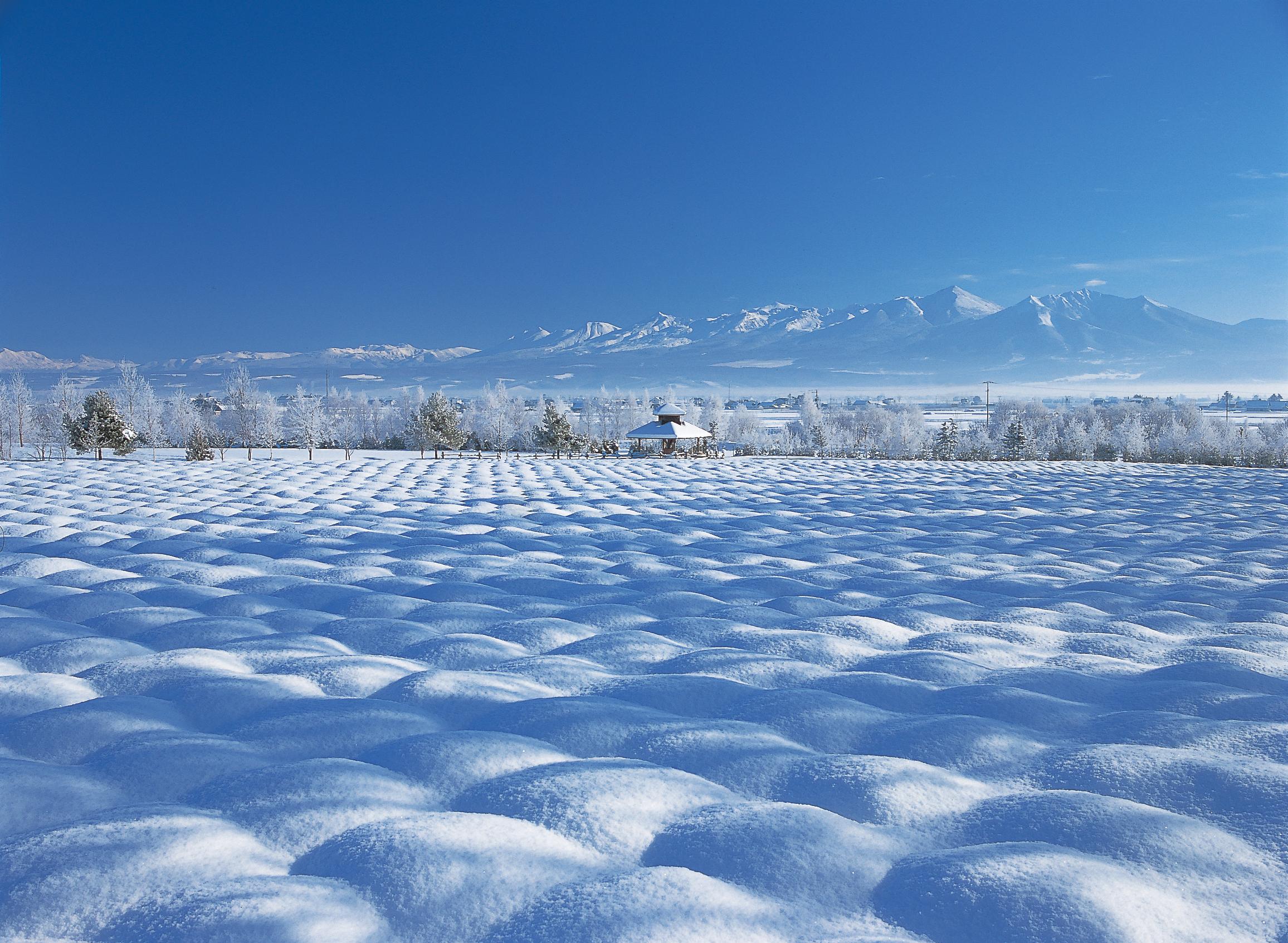 波のような雪原が見られるのは雪が降り始める時期だけ(写真提供は全てファーム富田)