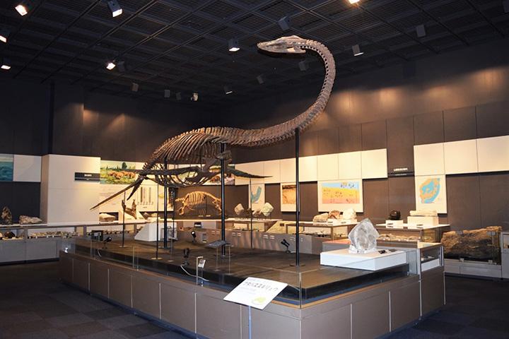全長約7mの「フタバスズキリュウ」の復元模型