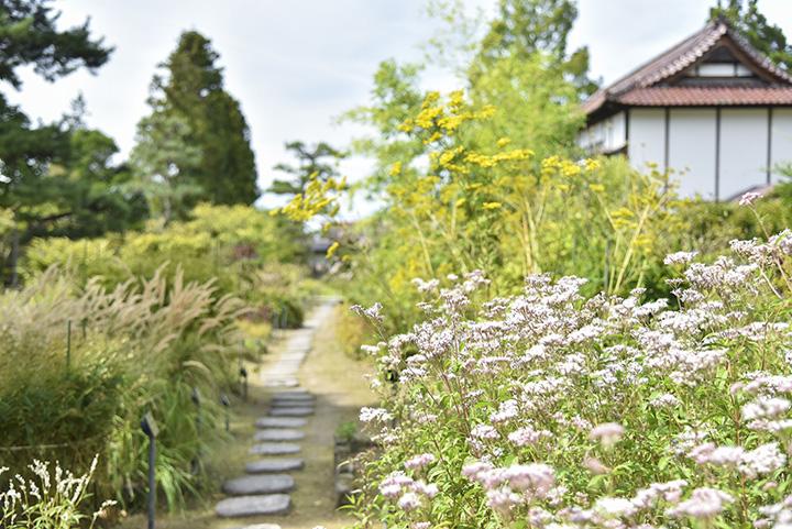 薬草園にはフジバカマ、オミナエシなどの植物が並ぶ