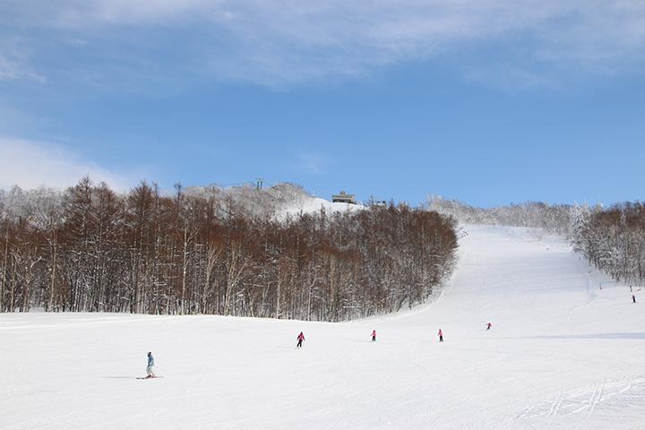 整備されたコースの他、新雪が楽しめると人気の未圧雪コースも8本ある