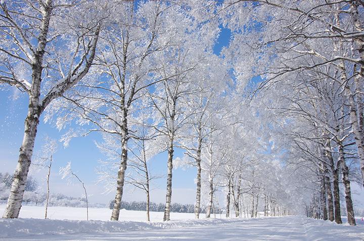 キラキラと霧氷(むひょう)が輝く純白の並木道はなんともフォトジェニック