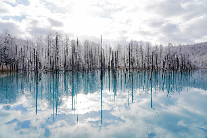 荒涼とした冬の森に透明なブルーが映える(写真提供:丘のまちびえいDMO 小倉博昭)