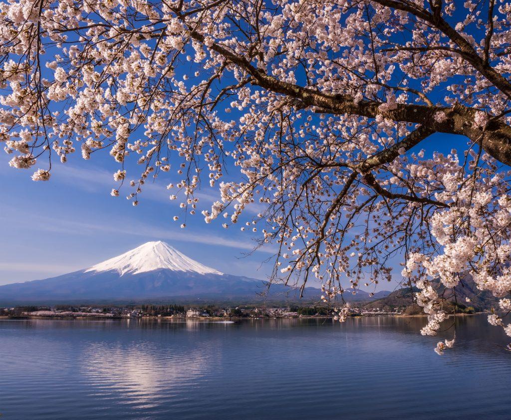 河口湖周辺の桜の名所5選。見頃や祭り情報もご紹介