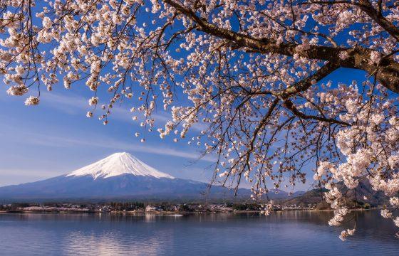 【2020年版】河口湖周辺の桜の名所7選。見頃や祭り情報もご紹介