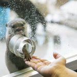 雨が降っても楽しめる。箱根のおすすめ観光スポット5選