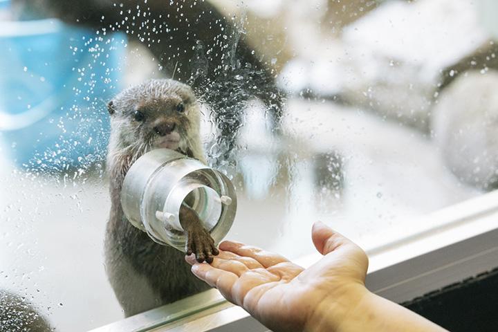 雨が降っても楽しめる。箱根のおすすめ観光スポット4選