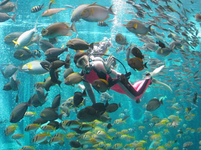 ダイバーが魚たちにエサをあげる海中ショーも人気