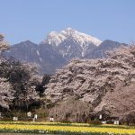 【2020年版】八ヶ岳・清里・小淵沢エリアでおすすめの桜の名所6選