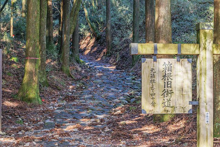 畑宿から芦ノ湖畔まで石畳の道が保存整備されている