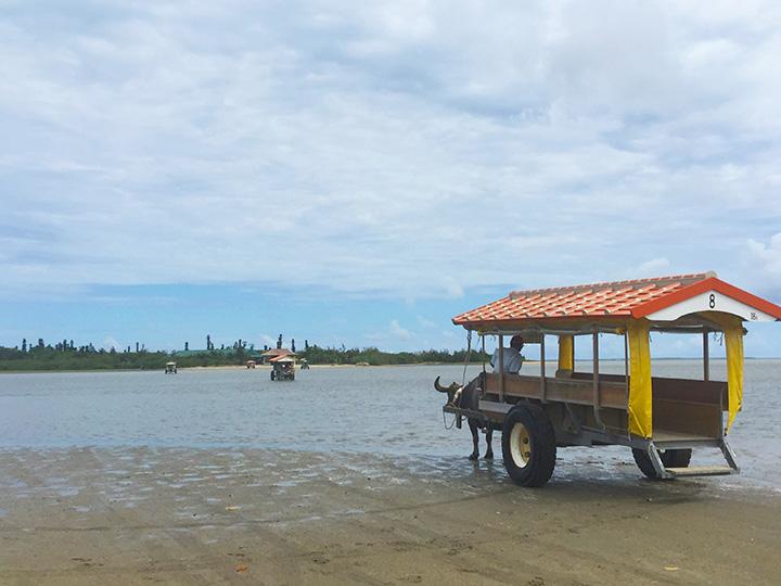 西表島~由布島の遠浅の海を渡る牛車