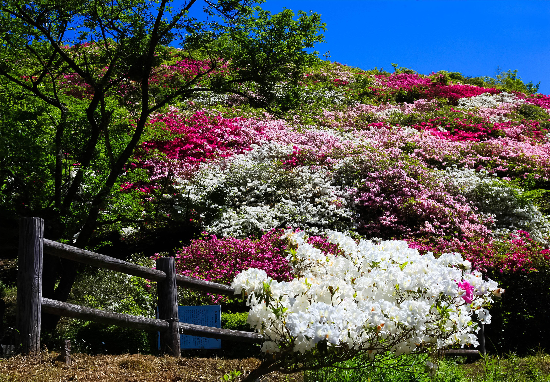 小高い丘にあり、お花見と眺望を同時に満喫できる