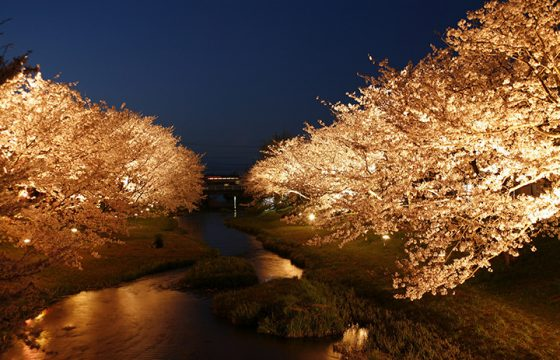 【2020年版】出雲・松江エリアのお花見スポット7選。桜の他、牡丹やチューリップも