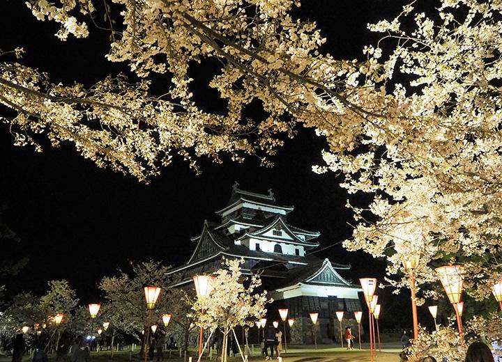 夜闇に浮かぶ城郭を背に、ライトアップされた桜が映える