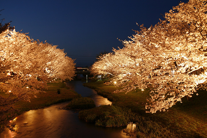 温泉街の中心部にお花見スポットがあり、浴衣姿で夜桜を観賞できるのもうれしい