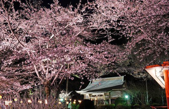 【2021年版】日光・鬼怒川の春を彩る桜の名所や祭り7選