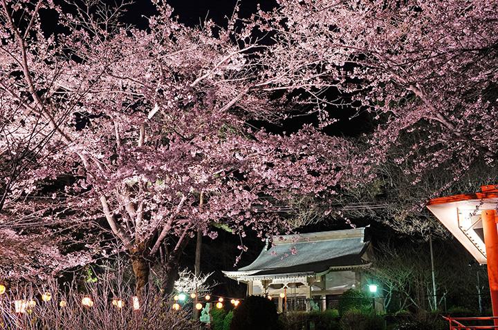 【2020年版】日光・鬼怒川の春を彩る桜の名所や祭り7選