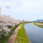 山口県・長門市の桜やツツジのお花見スポット6選