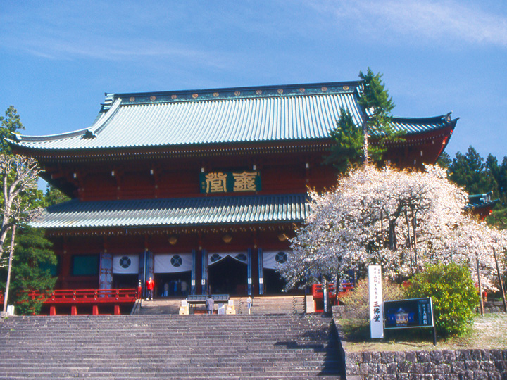 金剛桜は境内の桜を大本堂前に移植した明治時代の大僧正の諡(おくりな)が由来