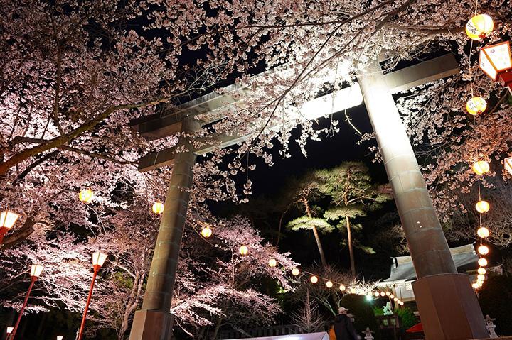 光に映し出された夜桜の美しさと、温泉地として歴史ある鬼怒川の温泉宴会文化を一度に味わえるひととき