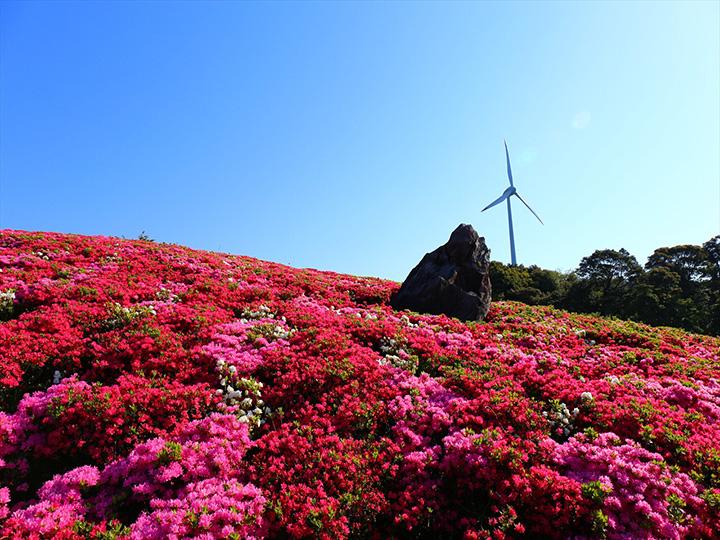 花と青空のコントラストが美しい