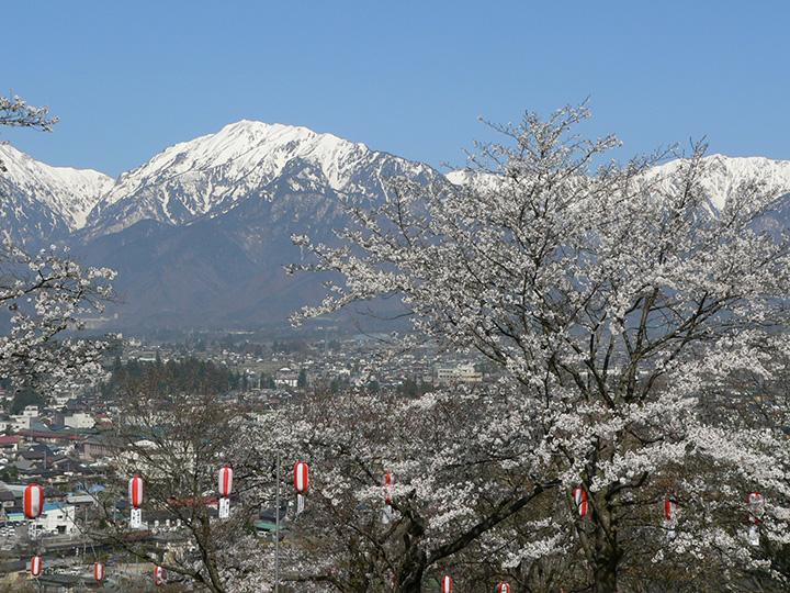 標高770mほどの大町公園から、桜と北アルプス、市街地を望む