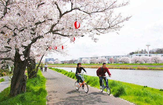 【2021年版】桜の街・土浦市で「土浦桜まつり2021」を満喫