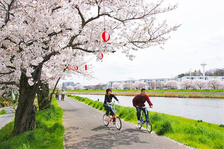 【2020年版】桜の街・土浦市で「土浦桜まつり2020」を満喫