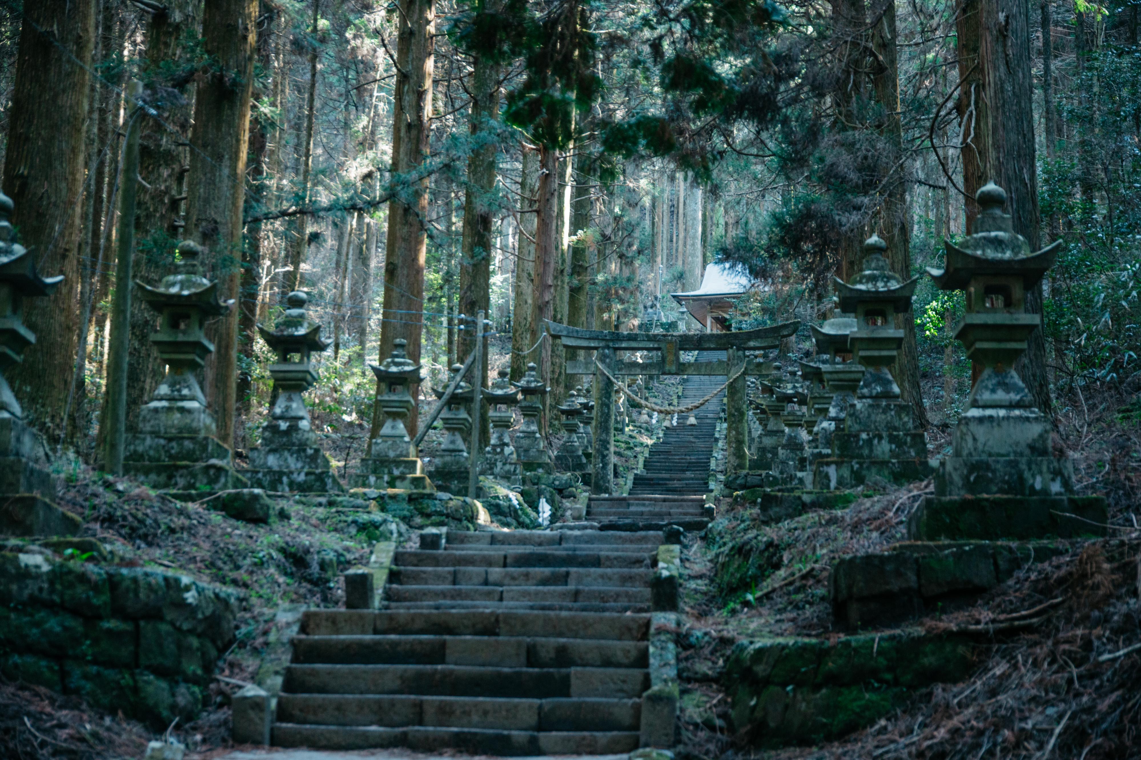 森の奥へ奥へと歩みを進めるほどに、異世界へと誘われているかのような気分に