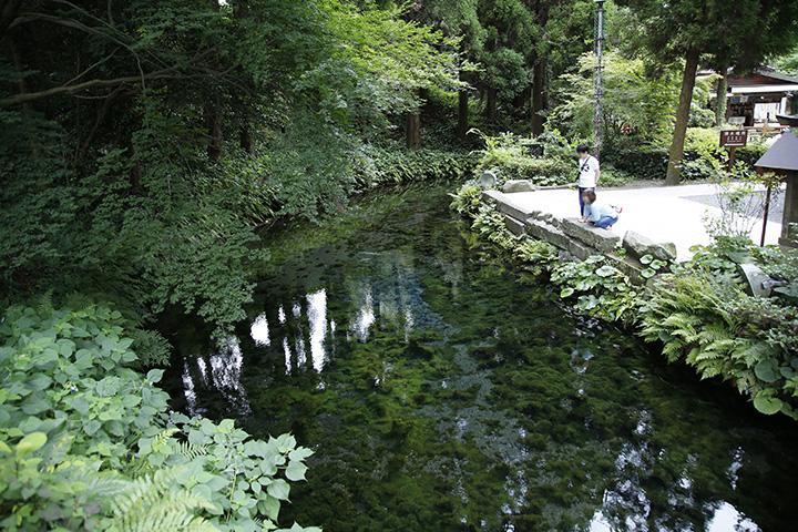 水底や苔まではっきり見えるほど、水源の透明度が高い