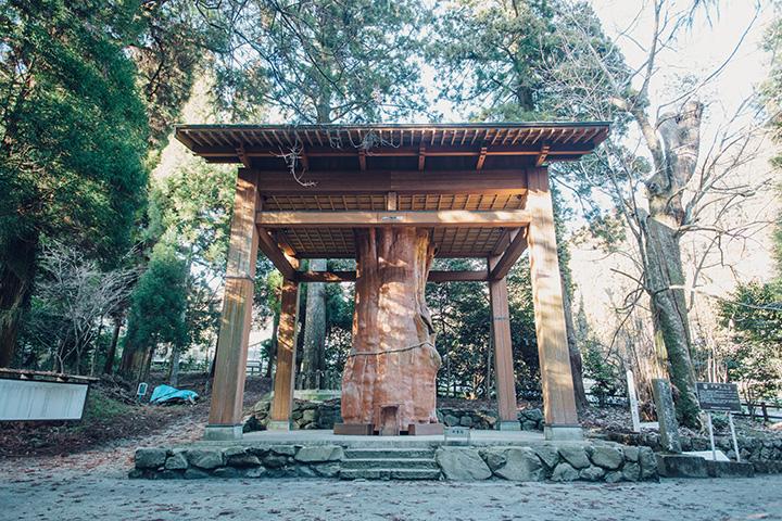 かつては高さが47mあったと伝えられる「手野の大杉」