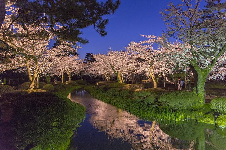 ライトアップされた桜が水辺を染め上げ、幻想的な雰囲気に
