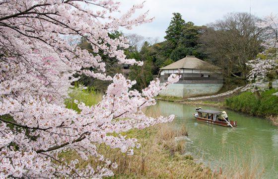 【2020年版】加賀・小松エリアの桜の名所7選