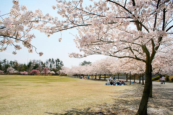 加賀市中央公園