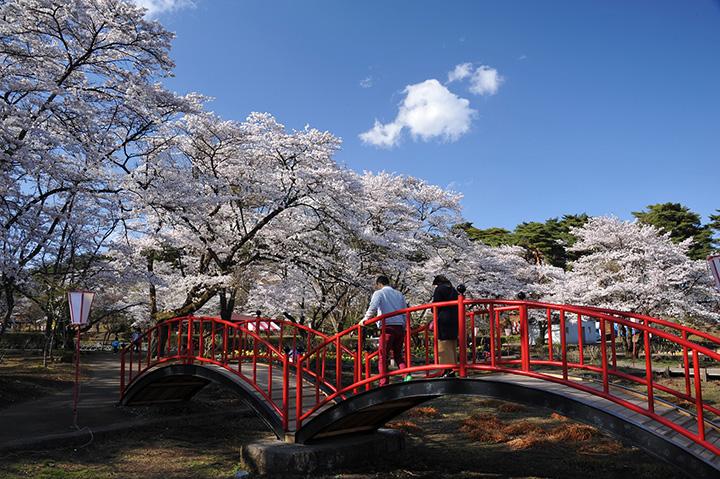栃木県内で指折りのお花見スポット