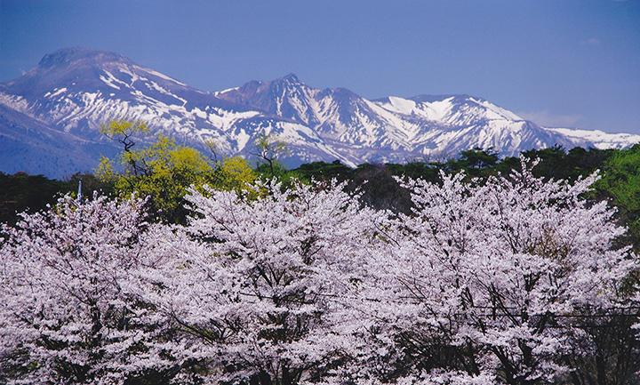 桜が開花する時期の那須連山には雪が残っていることが多く、桜がより一層映える