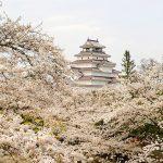 【2020年版】会津地方(会津若松・喜多方・磐梯・猪苗代)のおすすめ桜スポット