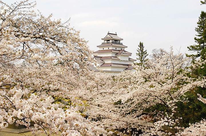 【2021年版】会津地方(会津若松・喜多方・磐梯・猪苗代)のおすすめ桜スポット