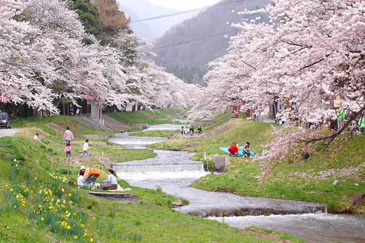 川辺でのんびりお花見を楽しむことも