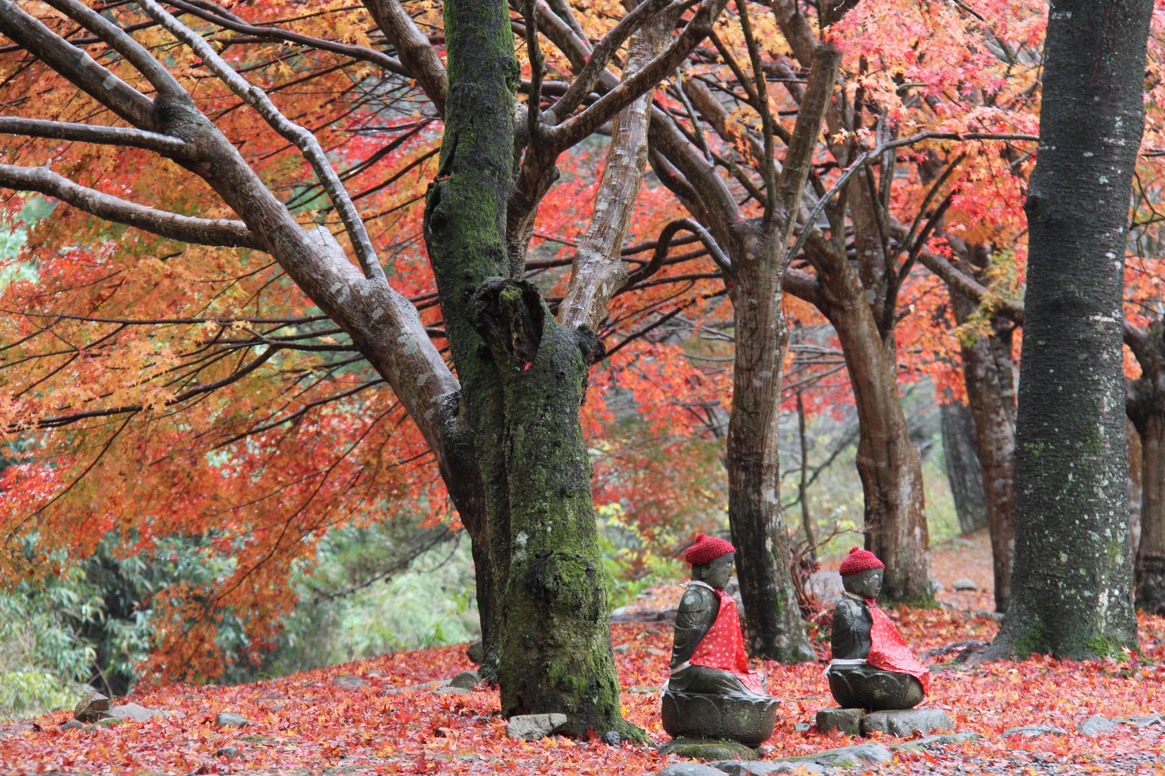 赤く染まったモミジが鮮やかな秋の「大寧寺」