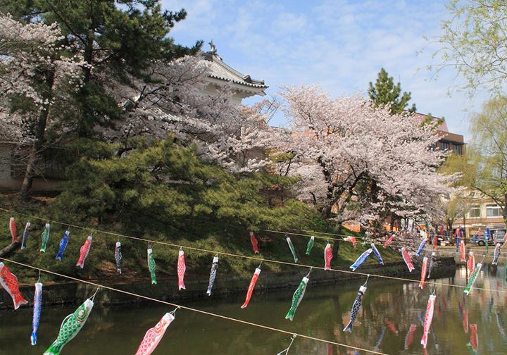 満開の桜と鯉のぼりに彩られた春の「亀城公園」