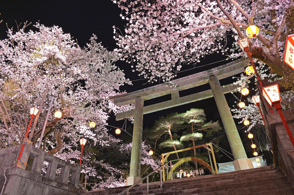 ライトアップに浮かび上がる鬼怒川護国神社の夜桜