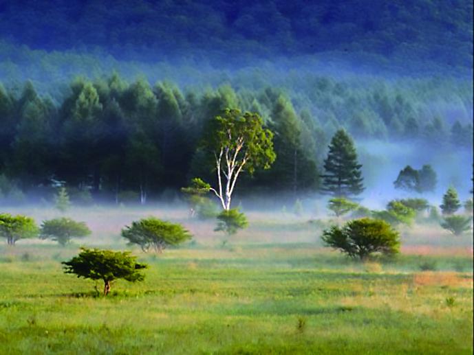 幻想的な風景 が広がる草原「小田代原(おだしろがはら)」