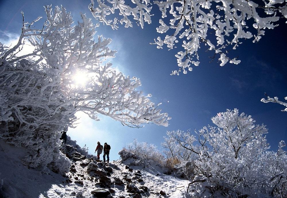 霧島連山最高峰、標高1,700mの韓国岳(からくにだけ)の冬山トレッキング