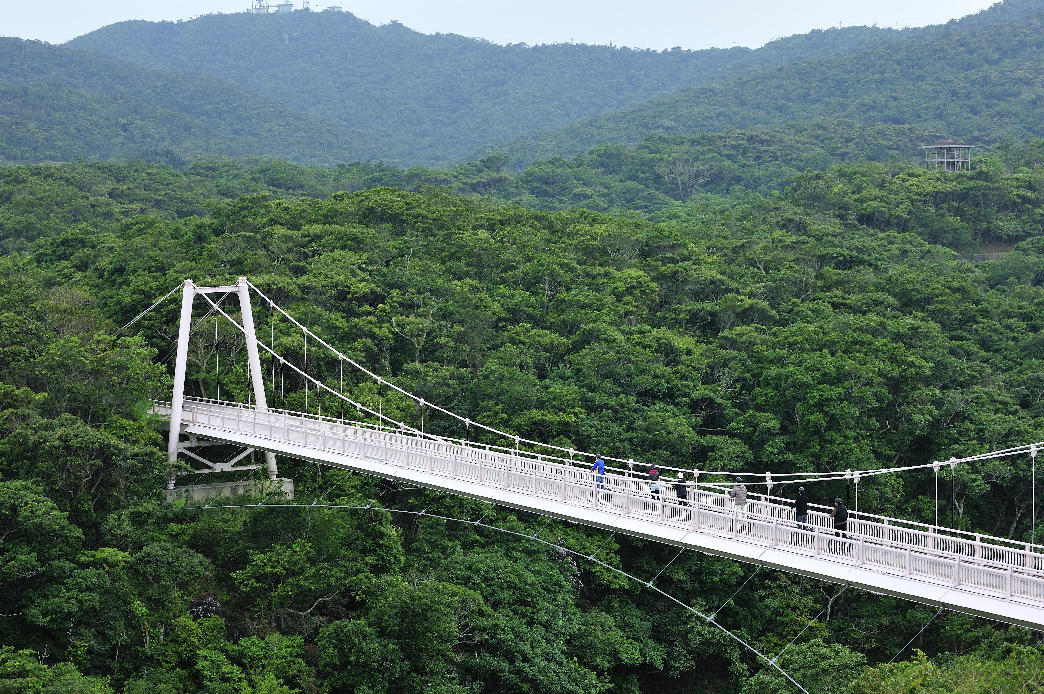全長約100m、水面からの高さ約18mの「聖紫花の橋」。森とダム湖を一望できる眺望スポット
